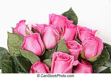 mooi, roze, druppels, water, rozen