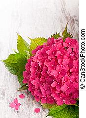 mooi, roze, hortensia, bloemen