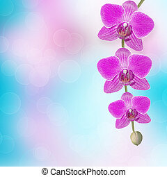 mooi, roze orchidee, tak, op, een, abstract, achtergrond, van, een, delicaat