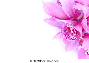 mooi, roze orchidee, tegen, blauwe achtergrond
