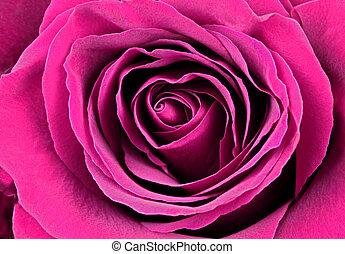 mooi, roze, rose.
