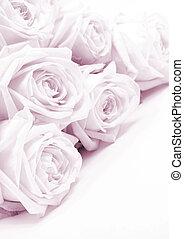 mooi, roze, toned, sepia, focus., rozen, achtergrond., trouwfeest, zacht