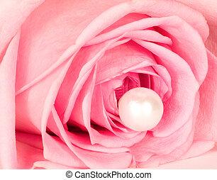 mooi, roze, vrijstaand, roos