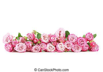 mooi, roze, witte , vrijstaand, rozen
