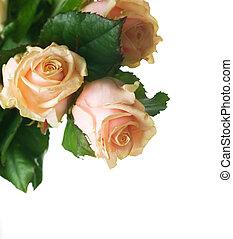 mooi, rozen, grens