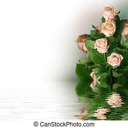 mooi, rozen