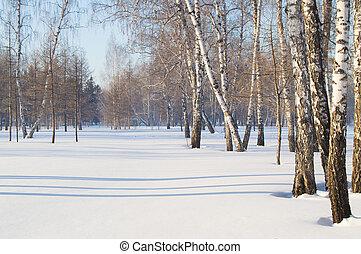 mooi, schaduwen, winter, ruimte, woods., bomen, park, sneeuw, kopie, landscape