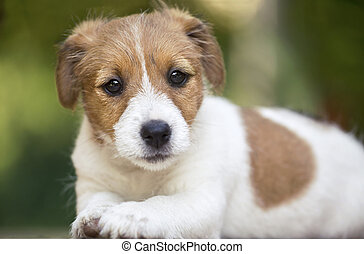 mooi, schattig, aanhalen, dog, puppy