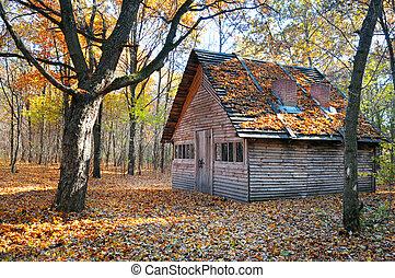 mooi, schuilplaats, herfst bos