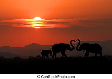 mooi, silhouette, van, afrikaanse olifanten, op, ondergaande zon