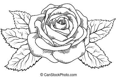 mooi, stijl, roos, black , witte , engraving.