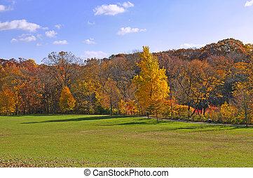 mooi, stille , park, in, helder, herfstachtig, kleuren