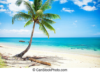 mooi, strand, met, kokospalm
