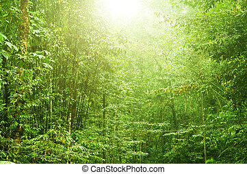 mooi, tropisch bos