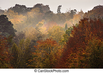 mooi, vibrant, herfst bos, herfst, landscape