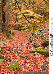 mooi, vibrant, scène, herfst bos, herfst, landscape