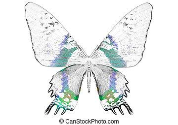 mooi, vlinder, kleurrijke, beeld, black , witte , vleugels
