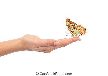 mooi, vlinder, op, een, vrouw, hand