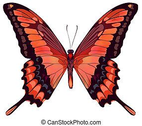 mooi, vlinder, vector, vrijstaand, rood