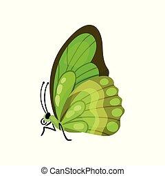mooi, vlinder, vliegen, illustratie, insect, vector, groene achtergrond, witte