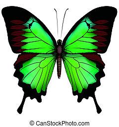mooi, vlinder, vrijstaand, illustratie, vector, groene achtergrond, witte