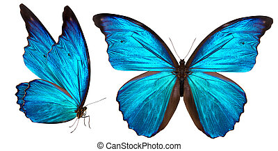 mooi, vlinder, witte , vrijstaand