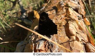 mooi, vlinder, zit, stomp, houten