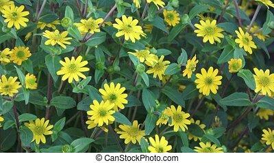 mooi, weinig; niet zo(veel), -, gele, focus., flowers.,...