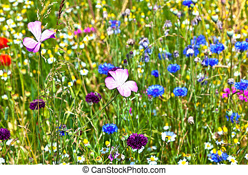 mooi, wildflowers, weide