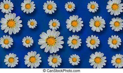 mooi, zomer, geanimeerd, floral, achtergrond