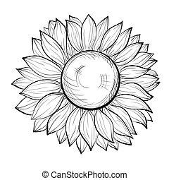 mooi, zonnebloem, vrijstaand, zwarte achtergrond, witte