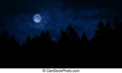 Moon Above The Woods At Night