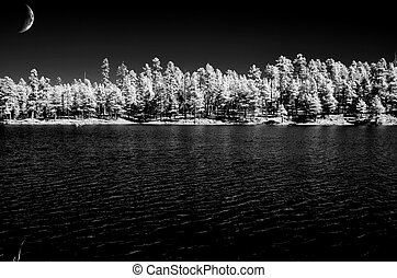 Moon and Forest Lake