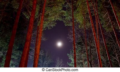 moon and pine, time-lapse