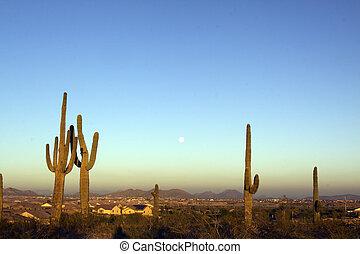 Moon and Saguaro Cactus - the full moon rising at sunset ...
