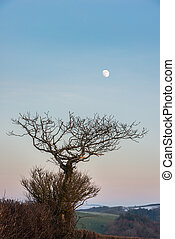 Moon and trees in winter