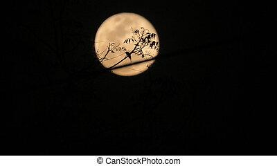 Moon behind a tree - Moon behind tree branch.