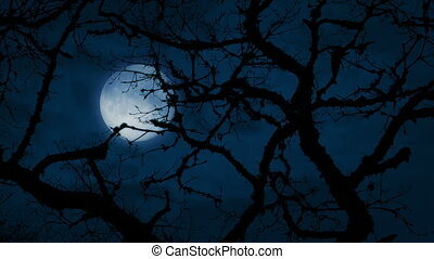 Moon Behind Ancient Gnarled Tree Branches - Very old tree in...