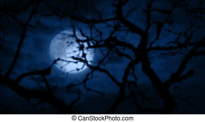 Moon Behind Gnarled Tree Branches - Full moon seen through...