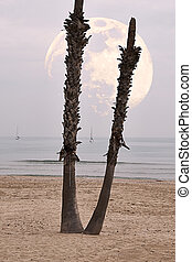 Moon behind palm tree in the beach