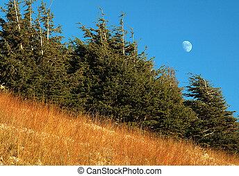 Moon behind trees 2