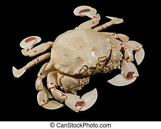 moon crab isolated on black