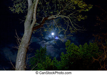 moon in night forest