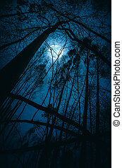Moon in the Trees - Silhouettes of distorted trees in a full...