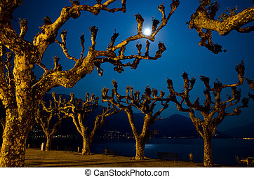 Moon light and trees on an alpine lake with mountains