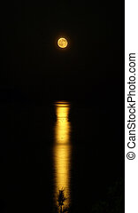 moon-light path on sea with fur tree branch silhouette