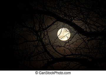 Moon - Nature background in vintage style