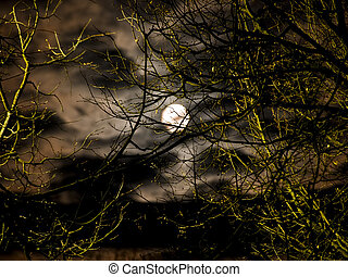 Moon - Night moon and clouds through the trees branch