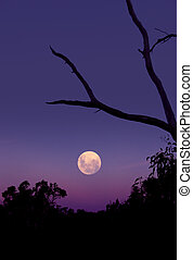 Moon Rising over Australian Bush