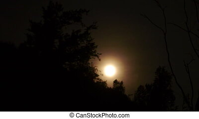 Moon Rising over trees